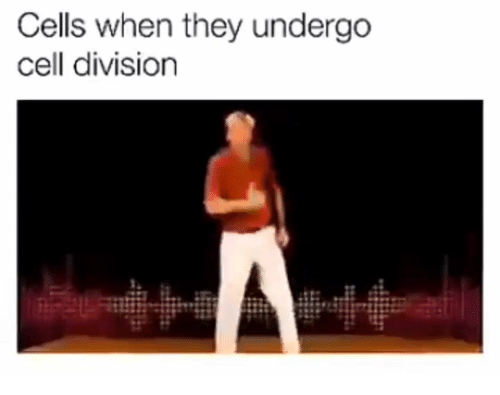 Division, Cell, and They: Cells when they undergo  cell division