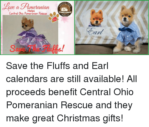 christmas memes and calendar central ohio pomeranian rescue pomeranian rescu save the fluffs