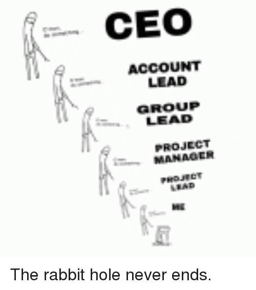rabbit, never, and programmer humor: ceo account lead group lead manaoer