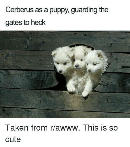 Cute, Taken, and Puppy: Cerberus as a puppy, guarding the  gates to heck