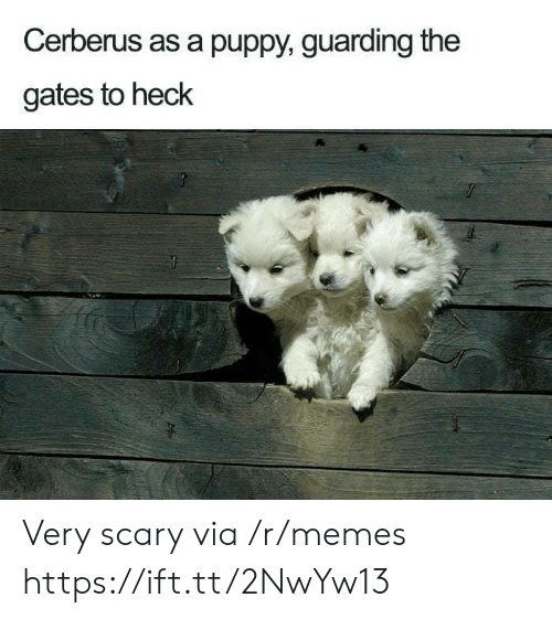 Memes, Puppy, and The Gates: Cerberus as a puppy, guarding the  gates to heck Very scary via /r/memes https://ift.tt/2NwYw13