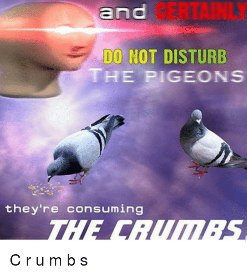 M&b, Do Not Disturb, and Certainly: CERTAINLY  DO NOT DISTURB  THE PIGEONS  they're consuming C r u m b s