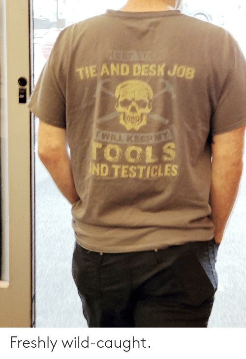 Desk, Wild, and Job: CEYOUR  TIE AND DESK JOB  WILL KEEP NY  TOOLS  ND TESTICLES Freshly wild-caught.