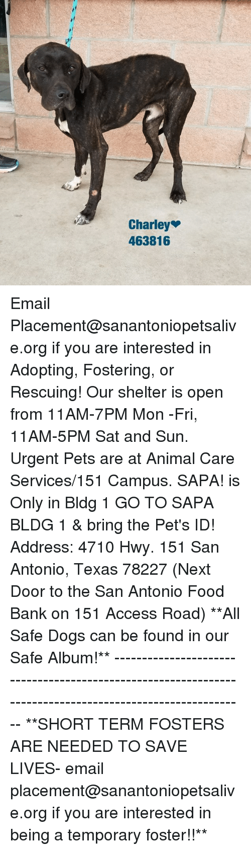 Dogs, Food, and Memes: Charley  463816 Email Placement@sanantoniopetsalive.org if you are interested in Adopting, Fostering, or Rescuing!  Our shelter is open from 11AM-7PM Mon -Fri, 11AM-5PM Sat and Sun.  Urgent Pets are at Animal Care Services/151 Campus. SAPA! is Only in Bldg 1 GO TO SAPA BLDG 1 & bring the Pet's ID! Address: 4710 Hwy. 151 San Antonio, Texas 78227 (Next Door to the San Antonio Food Bank on 151 Access Road)  **All Safe Dogs can be found in our Safe Album!** ---------------------------------------------------------------------------------------------------------- **SHORT TERM FOSTERS ARE NEEDED TO SAVE LIVES- email placement@sanantoniopetsalive.org if you are interested in being a temporary foster!!**