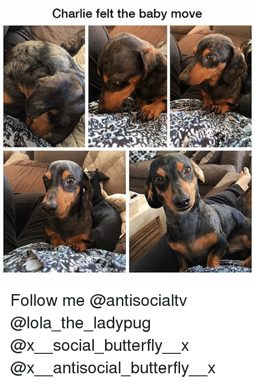 Charlie, Memes, and Butterfly: Charlie felt the baby move Follow me @antisocialtv @lola_the_ladypug @x__social_butterfly__x @x__antisocial_butterfly__x