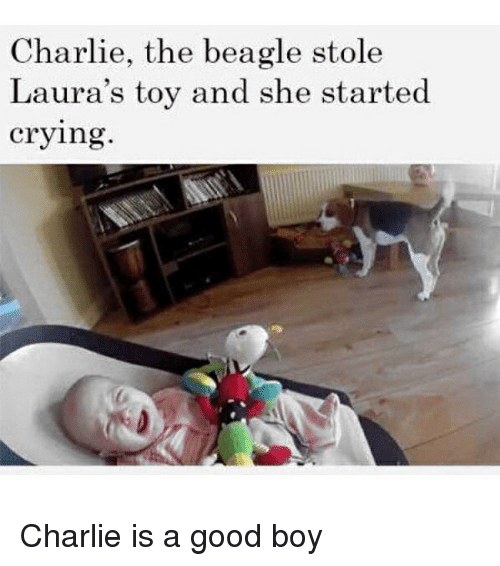 Charlie, Crying, and Funny: Charlie, the beagle stole  Laura's toy and she started  crying Charlie is a good boy