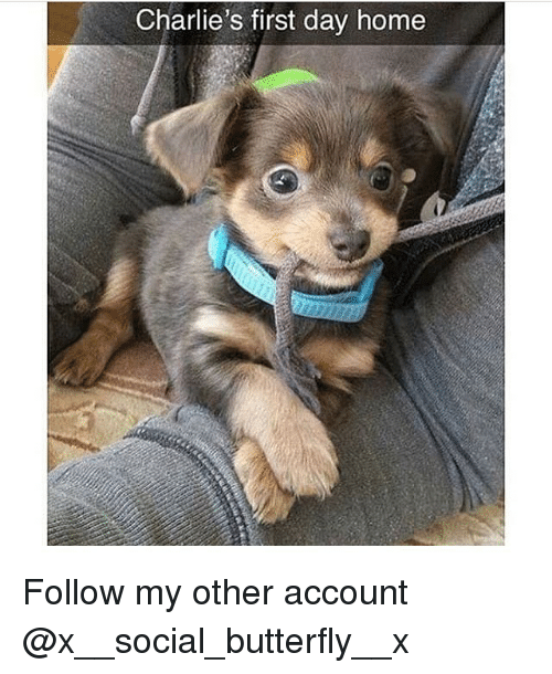 Memes, Butterfly, and Home: Charlie's first day home Follow my other account @x__social_butterfly__x