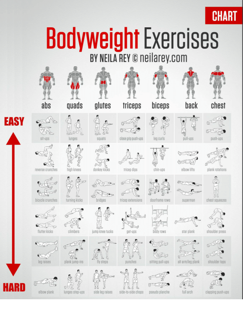 Donkey, Rey, and Superman: CHART  Bodyweight Exercises  BY NEILA REY neilarey.com  abs quads glutes triceps biceps back chest  EAS  sit-ups  lunges  squats  close grip push-ups eg curls  pul-ups  push-ups  reverse crunches high knees d  donkey kicks  trice卩dips  chin-ups  elbowlifts  plank rotations  bicycle crunches  turning kicks  tricep extensions doorframe rows superman chest squeezes  flutter kicks  climbers  jumpknee tucks  get-ups  star plank  shoulder press  leg raises  plank jump-ins  fly steps  punches  siting pull-ups al arm/leg plank shoulder taps  20920  elbow plank lunges step-ups side leg raises side-to-side chops pseudo planche fllch clpig push-ups