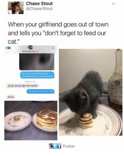 """Lol, Memes, and Chase: Chase Stout  @ChaserStout  When your girlfriend goes out of town  and tells you """"don't forget to feed our  cat.""""  Do you know it Wilson ikes  chocolate chips in his pancakes  did you give him some?  Would you be mad #1 dd  No lol  Postize"""