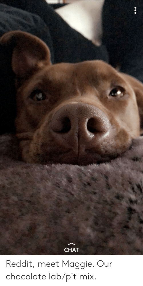 CHAT Reddit Meet Maggie Our Chocolate Labpit Mix   Reddit
