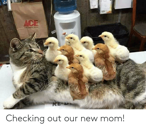 Mom, New, and Out: Checking out our new mom!