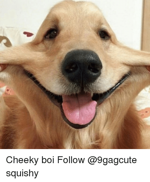 Memes, 🤖, and Boi: Cheeky boi Follow @9gagcute squishy