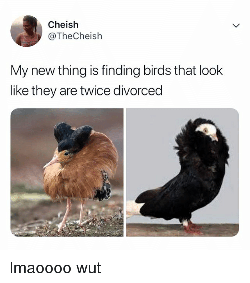 Birds, Relatable, and They: Cheish  @TheCheish  My new thing is finding birds that look  like they are twice divorced lmaoooo wut