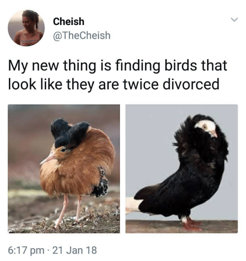 Birds, They, and Thing: Cheish  @TheCheish  My new thing is finding birds that  look like they are twice divorced  6:17 pm 21 Jan 18