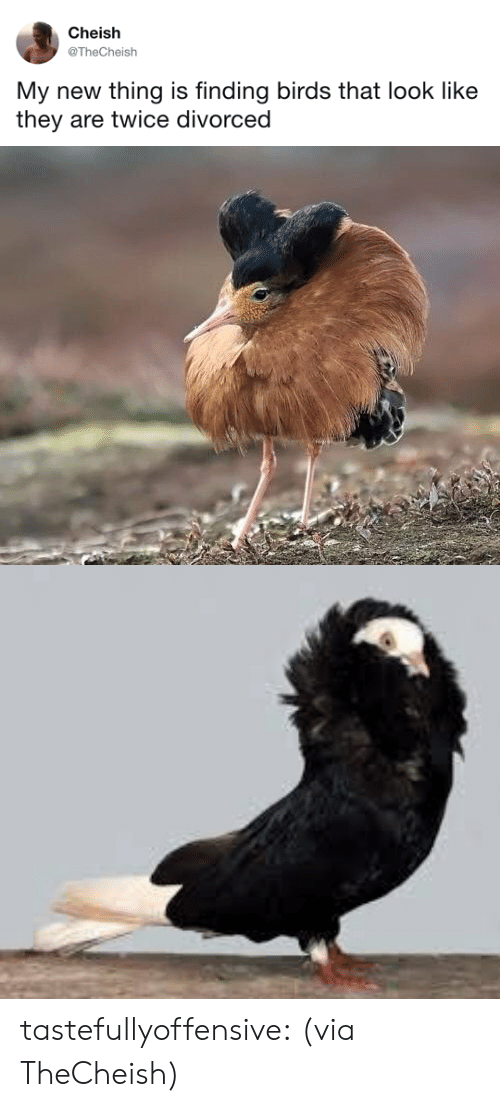 Tumblr, Twitter, and Birds: Cheish  @TheCheish  My new thing is finding birds that look like  they are twice divorced tastefullyoffensive:  (via TheCheish)