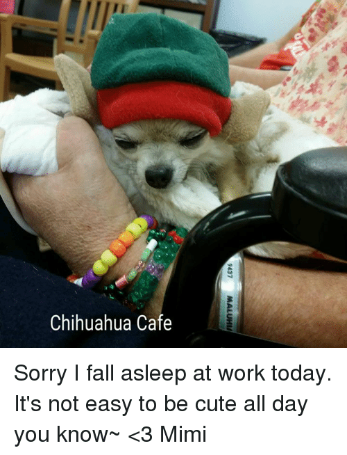 25  best memes about falling asleep at work