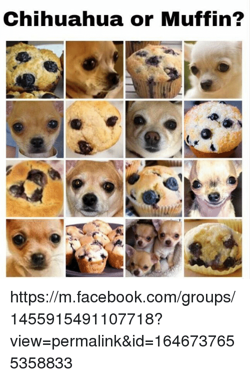 Chihuahua Facebook And Or In Https