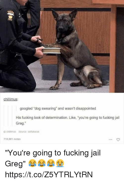 "Disappointed, Fucking, and Jail: chillimus  googled ""dog swearing"" and wasn't disappointed  His fucking look of determination. Like, 'you're going to fucking jail  Greg.""  chillimus Source: seifukucat  719,081 notes  90 ""You're going to fucking jail Greg"" 😂😂😂😭 https://t.co/Z5YTRLYtRN"