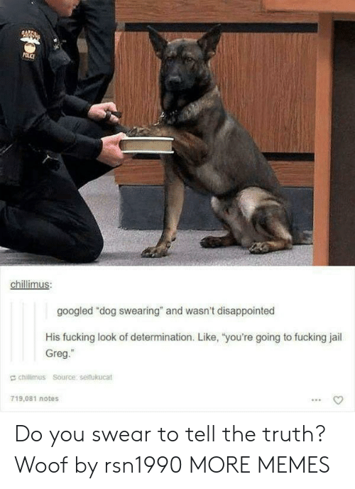 """Dank, Disappointed, and Fucking: chillimus  googled """"dog swearing"""" and wasn't disappointed  His fucking look of determination. Like, """"you're going to fucking jail  Greg.""""  E chillimus Source serfukucat  719,081 notes Do you swear to tell the truth? Woof by rsn1990 MORE MEMES"""