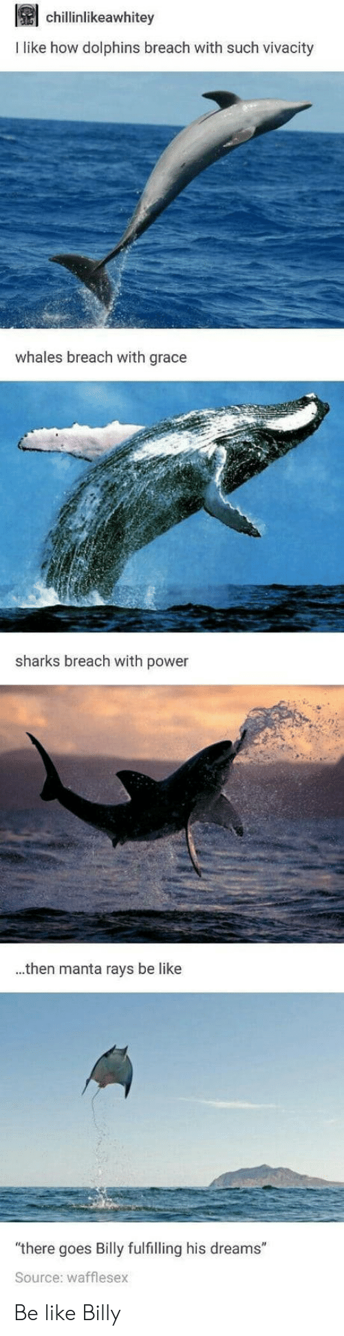 "Be Like, Dolphins, and Power: chillinlikeawhitey  I like how dolphins breach with such vivacity  whales breach with grace  sharks breach with power  ..then manta rays be like  ""there goes Billy fulfilling his dreams""  Source: wafflesex Be like Billy"