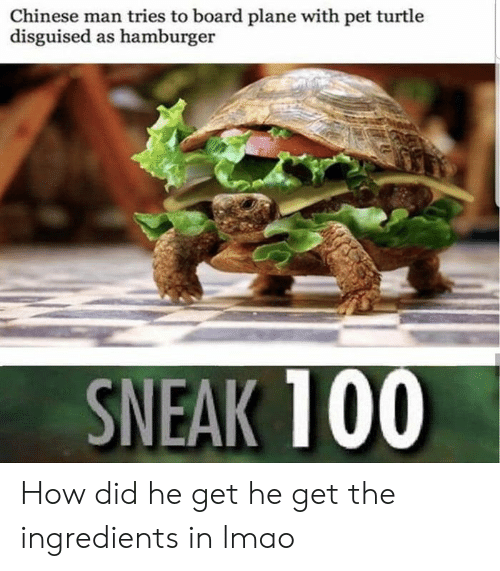Lmao, Chinese, and Turtle: Chinese man tries to board plane with pet turtle  disguised as hamburger  SNEAK 100 How did he get he get the ingredients in lmao