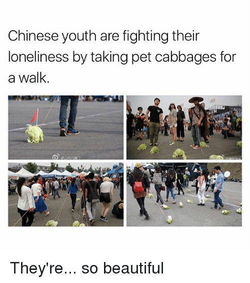 Beautiful, Chinese, and Loneliness: Chinese youth are fighting their  loneliness by taking pet cabbages for  a walk They're... so beautiful