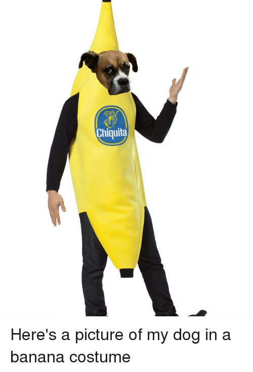 Chiquita Here S A Picture Of My Dog In A Banana Costume Meme On Me Me