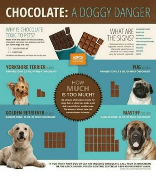 Is Milk Chocolate Toxic To Dogs