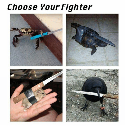 Choose Your Fighter Dank Meme On Me Me