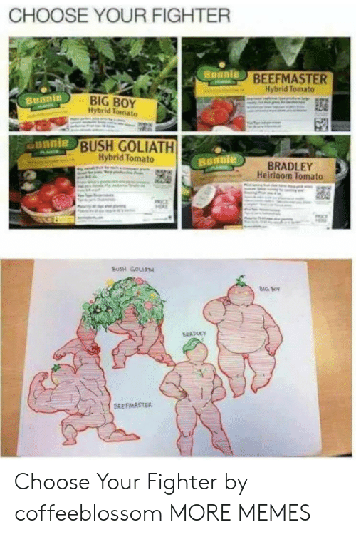 Dank, Memes, and Target: CHOOSE YOUR FIGHTER  BEEFMASTER  Hybrid Tomato  BIG BOY  Ilybrid Tomato  Bunnie  unnie  BUSH GOLIATH  Hybrid Tomato  BRADLEY  Heirloom Tomato  BUSH GOLIATH  BIG S Choose Your Fighter by coffeeblossom MORE MEMES
