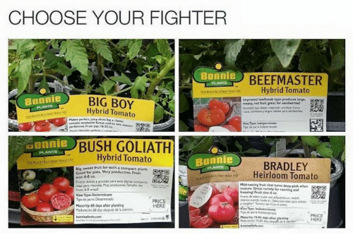 Beef And Vine Choose Your Fighter Bonnie Master Hybrid Tomato