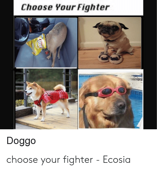 Doggo, Choose, and  Fighter: Choose Your Fighter  Doggo choose your fighter - Ecosia