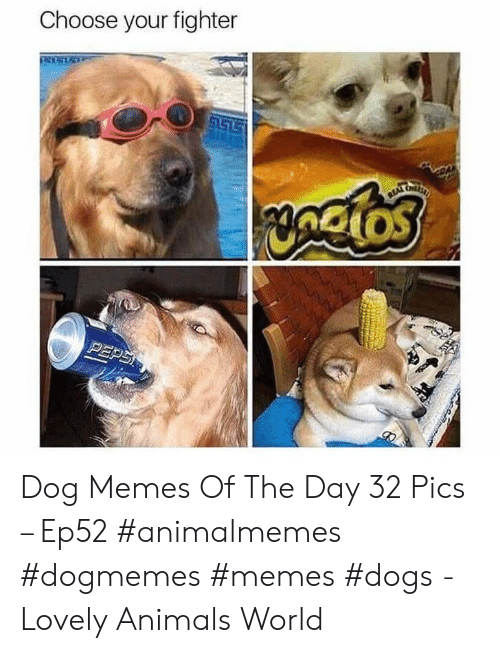 Animals, Dogs, and Memes: Choose your fighter  S157  yngios  PEPS Dog Memes Of The Day 32 Pics – Ep52 #animalmemes #dogmemes #memes #dogs - Lovely Animals World