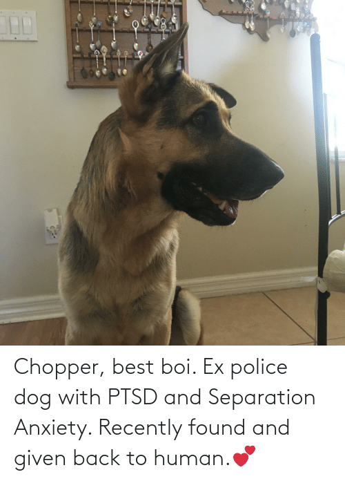 Police, Anxiety, and Best: Chopper, best boi. Ex police dog with PTSD and Separation Anxiety. Recently found and given back to human.💕