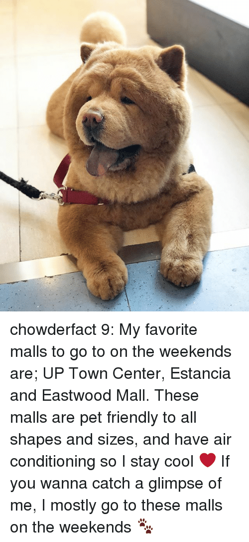 Memes, Cool, and 🤖: chowderfact 9: My favorite malls to go to on the weekends are; UP Town Center, Estancia and Eastwood Mall. These malls are pet friendly to all shapes and sizes, and have air conditioning so I stay cool ❤️ If you wanna catch a glimpse of me, I mostly go to these malls on the weekends 🐾