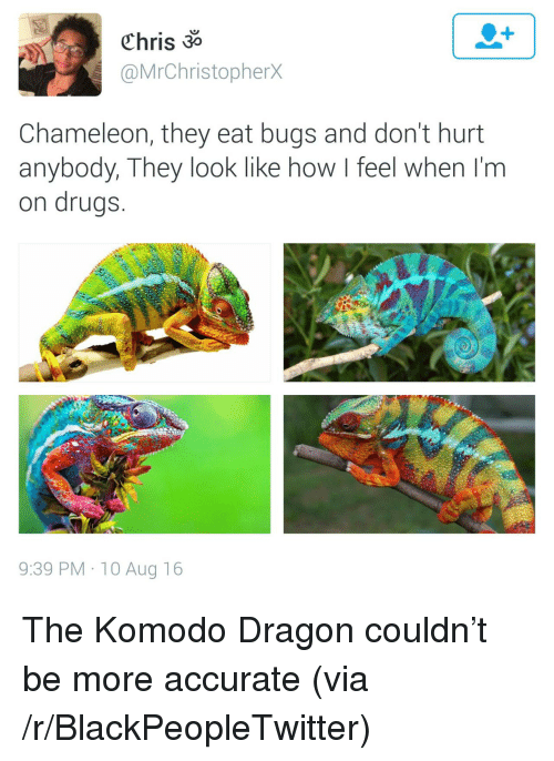Blackpeopletwitter, Drugs, and Chameleon: Chris 3  @MrChristopherX  Chameleon, they eat bugs and don't hurt  anybody, They look like how I feel when I'm  on drugs  9:39 PM 10 Aug 16 <p>The Komodo Dragon couldn&rsquo;t be more accurate (via /r/BlackPeopleTwitter)</p>