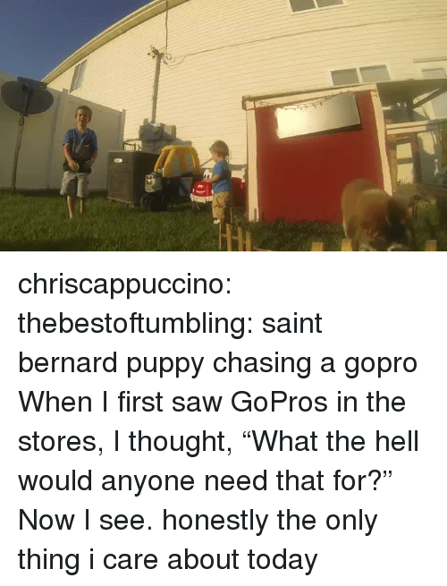 "Saw, Tumblr, and GoPro: chriscappuccino:  thebestoftumbling:  saint bernard puppy chasing a gopro  When I first saw GoPros in the stores, I thought, ""What the hell would anyone need that for?"" Now I see.  honestly the only thing i care about today"