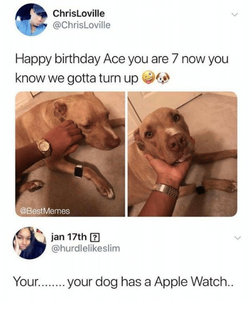 Apple, Apple Watch, and Birthday: ChrisLoville  @ChrisLoville  Happy birthday Ace you are 7 now you  know we gotta turn up学@  @BestMemes  Jan 17th  @hurdlelikeslim  Youyour dog has a Apple Watch..