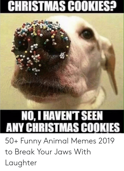 Funny Christmas Memes 2019.Christmas Cookies No I Havent Seen Any Christmas Cookies 50