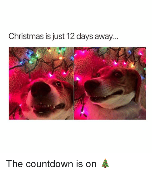 Christmas, Countdown, and Memes: Christmas is just 12 days away... The countdown is on 🎄