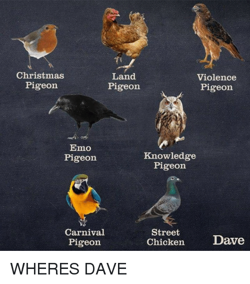 Christmas, Emo, and Chicken: Christmas  Pigeon  Land  Pigeon  Violence  Pigeon  Emo  Pigeon  Knowledge  Pigeon  Carnival  Pigeon  Street  Chicken  Dave WHERES DAVE