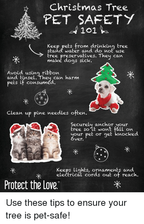 Christmas tree pet safety 101 keep pets from drinking tree stand memes christmas tree and ensure christmas tree pet safety 101 keep pets from solutioingenieria Choice Image