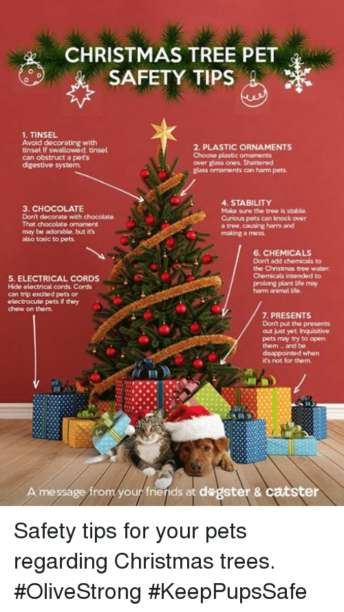disappointed memes and chocolate christmas tree pet safety tips 1 tinsel avoid - Christmas Decorating Safety Tips