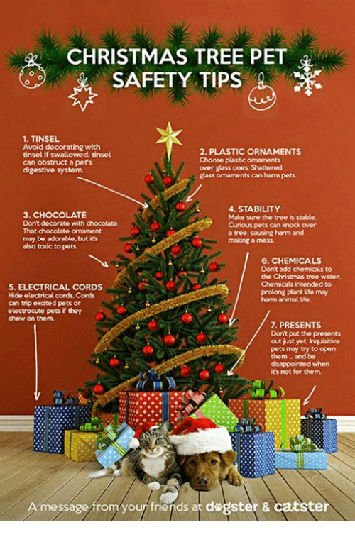 disappointed memes and chocolate christmas tree pet safety tips 1 tinsel avoid - What Do You Put In Christmas Tree Water