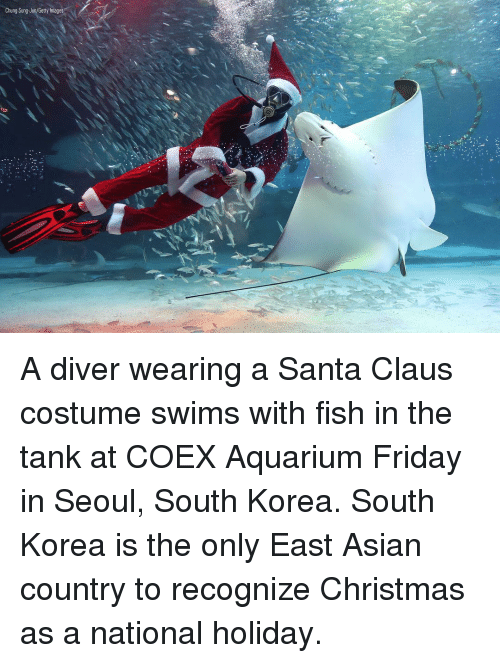 Asian, Christmas, and Friday: Chung Sung-Jun/Getty Images A diver wearing a Santa Claus costume swims with fish in the tank at COEX Aquarium Friday in Seoul, South Korea. South Korea is the only East Asian country to recognize Christmas as a national holiday.