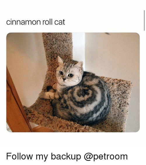 Funny, Cat, and Cinnamon: cinnamon roll cat Follow my backup @petroom