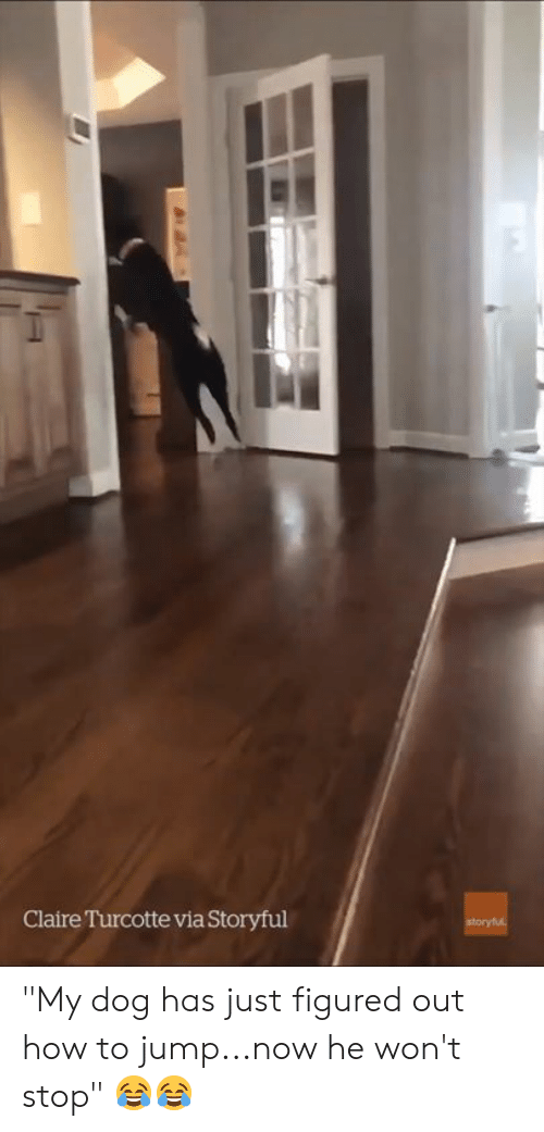 """How To, How, and Dog: Claire Turcotte via Storyful """"My dog has just figured out how to jump...now he won't stop"""" 😂😂"""