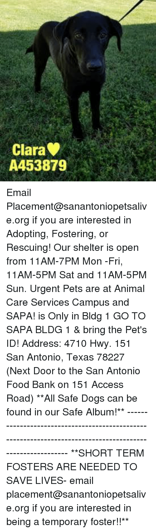 Dogs, Food, and Memes: Clara  A453879 Email Placement@sanantoniopetsalive.org if you are interested in Adopting, Fostering, or Rescuing!  Our shelter is open from 11AM-7PM Mon -Fri, 11AM-5PM Sat and 11AM-5PM Sun.  Urgent Pets are at Animal Care Services Campus and SAPA! is Only in Bldg 1 GO TO SAPA BLDG 1 & bring the Pet's ID! Address: 4710 Hwy. 151 San Antonio, Texas 78227 (Next Door to the San Antonio Food Bank on 151 Access Road)  **All Safe Dogs can be found in our Safe Album!** ---------------------------------------------------------------------------------------------------------- **SHORT TERM FOSTERS ARE NEEDED TO SAVE LIVES- email placement@sanantoniopetsalive.org if you are interested in being a temporary foster!!**