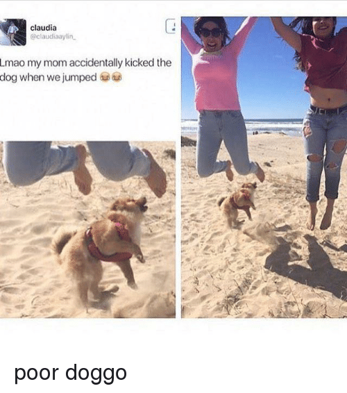 Funny, Lmao, and Jumped: claudia  @claudiaaylin  Lmao my mom accidentally kicked the  dog when we jumped poor doggo