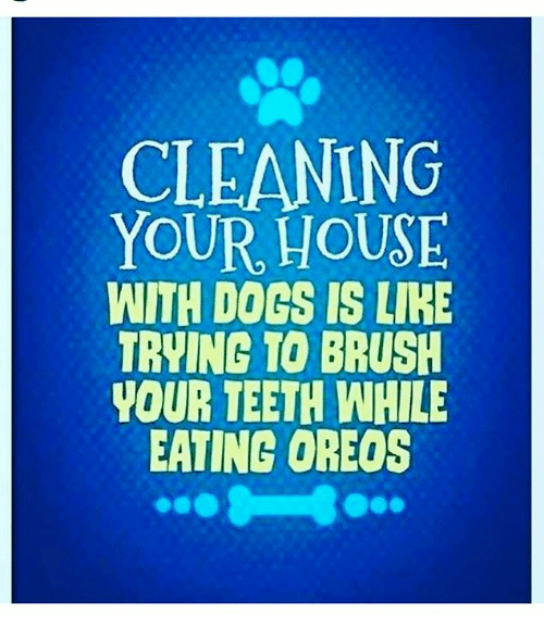 cleaning your house with dogs is lie trying to brush 27164652 ✅ 25 best memes about brush your teeth brush your teeth memes